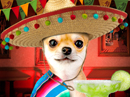 Happy Cinco de Mayo Talking Card Cinco De Mayo eCards