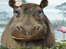 Hippo Birthday Talking Card Birthday eCards