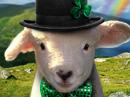 Erin Go Baaa Talking Card St. Patrick's Day eCards