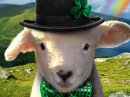 Erin Go Baaa Talking Card St. Patrick's Day eCards