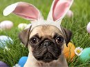 Pugs Bunny Talking Card Easter eCards