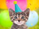 Meowy Birthday Talking Card Birthday eCards