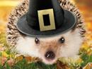 Holiday Hedgehug Talking Card Thanksgiving eCards