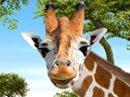 Giraffe Laugh Talking Card Just Because eCards