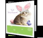 Purr-fect Easter