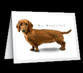 Long on Gratitude greeting card
