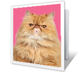Purrfect Birthday! greeting card