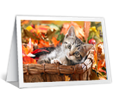Little Joys greeting card