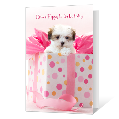 Happy Little Birthday Birthday Cards