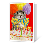 Birthday Cat-ittude Birthday Cards