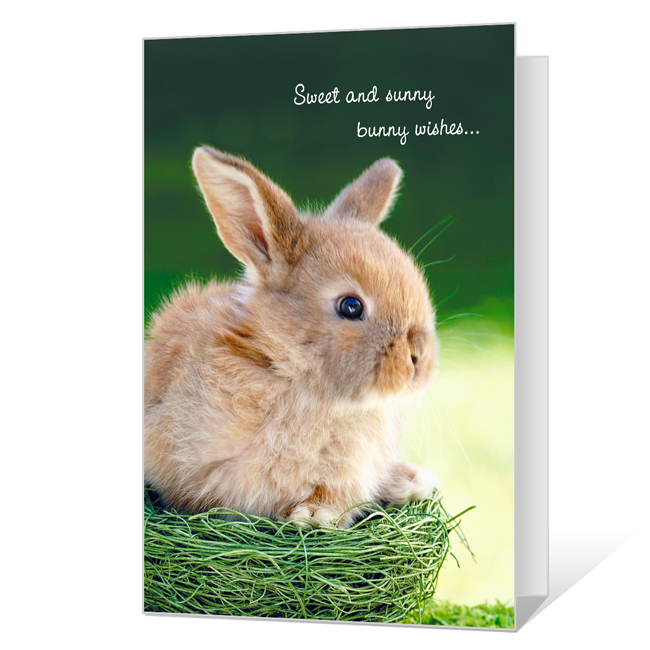 Sunny Bunny Wishes Easter Cards
