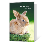 Sunny Bunny Wishes greeting card