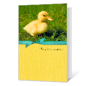 Great Big Love Easter Cards