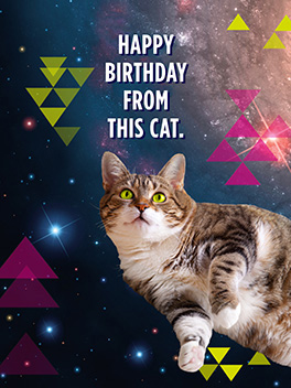 this cat birthday card