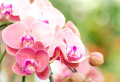 28th anniversary flower:Orchid