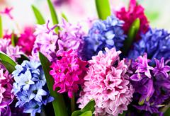 41st anniversary flower: Hyacinth