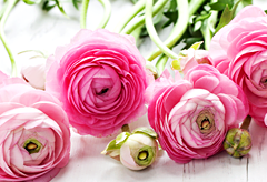 48th anniversary flower: Ranunculus