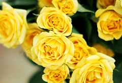 50th anniversary flower: Yellow Roses
