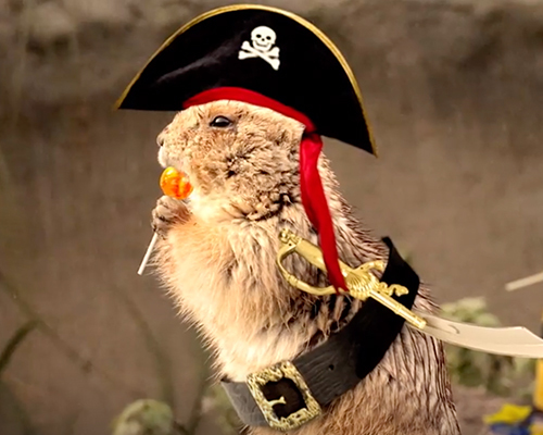 animal with pirate hat eating candy i want candy halloween ecard